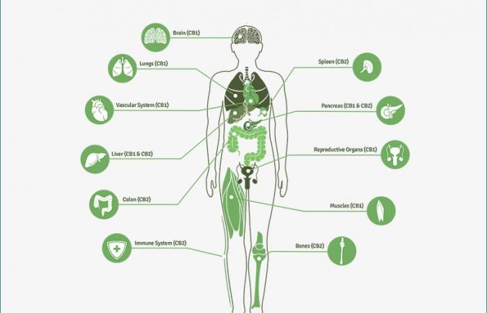 Κανναβιδιόλη και Φάρμακα : ΑΛΛΗΛΕΠΙΔΡΑΣΕΙΣ