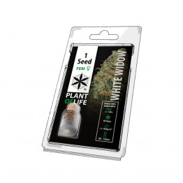 PLANT OF LIFE - WHITE WIDOW - 1 SEEDS